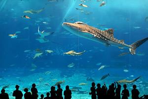 ◆≪美ら海へアクセス抜群≫ 水族館チケット付きプラン~朝食付き~