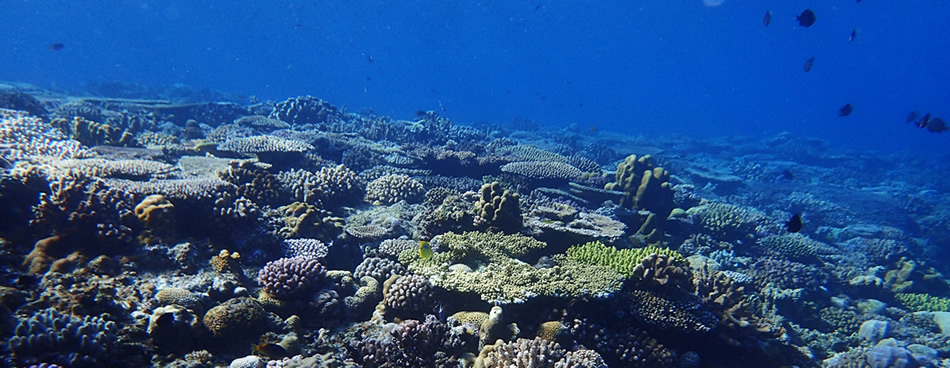 ベストウェスタンリゾート沖縄幸喜ビーチ|アクティビティ|ダイビングオプション