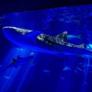 【鹿児島市 観光】いおワールドかごしま水族館