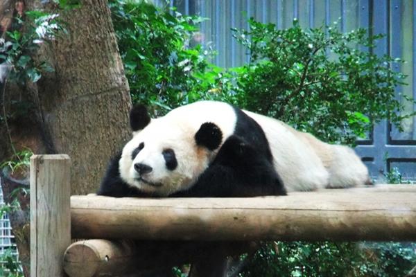 上野動物園(所要時間40分)