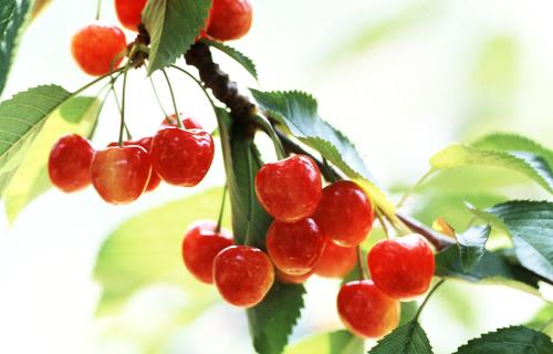 果樹王国 ひがしねの四季のおすすめ