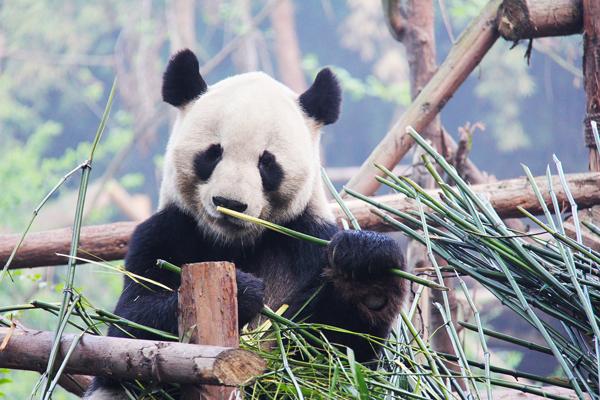 【スタンダード】AKIBA満喫!<br/>上野動物園や浅草に好アクセス!【素泊り】