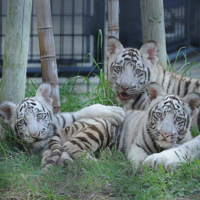 【鹿児島市 観光】平川動物園