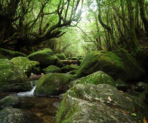 【屋久島 観光】世界自然遺産の島「屋久島」