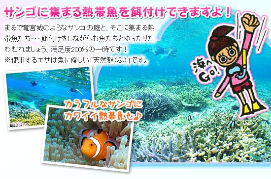 沖縄スノーケル 熱帯魚餌付けツアー